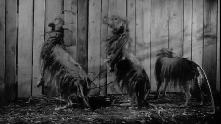Killer Shrews (1959)